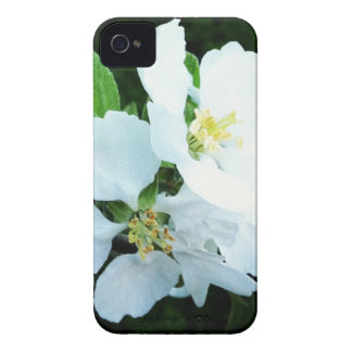 Pear tree flower iPhone 4 cover