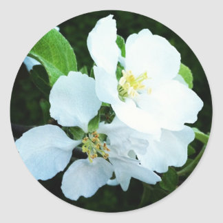 Pear tree flower round sticker