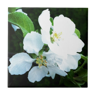 Pear tree flower small square tile