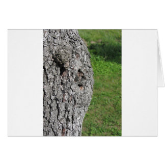 Pear tree trunk against green background card