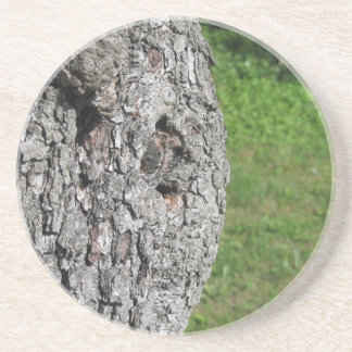 Pear tree trunk against green background coaster