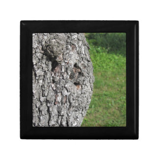 Pear tree trunk against green background gift box