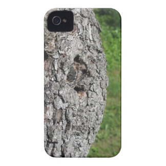 Pear tree trunk against green background iPhone 4 Case-Mate cases