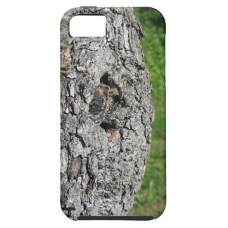 Pear tree trunk against green background iPhone 5 covers