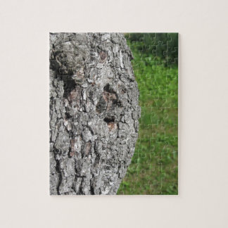 Pear tree trunk against green background jigsaw puzzle