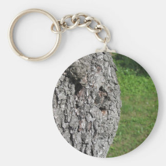 Pear tree trunk against green background key ring