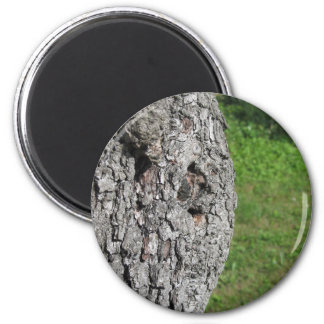 Pear tree trunk against green background magnet