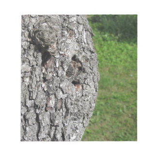 Pear tree trunk against green background notepad