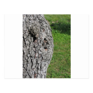 Pear tree trunk against green background postcard