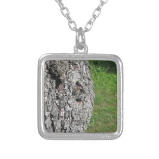 Pear tree trunk against green background silver plated necklace