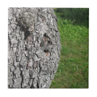 Pear tree trunk against green background tile
