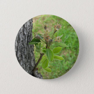 Pear tree twig with buds in spring  Tuscany, Italy 6 Cm Round Badge