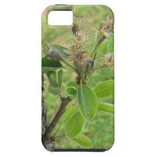 Pear tree twig with buds in spring  Tuscany, Italy Case For The iPhone 5