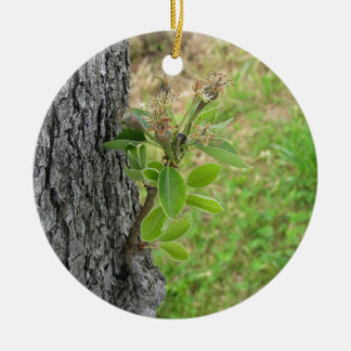 Pear tree twig with buds in spring  Tuscany, Italy Ceramic Ornament