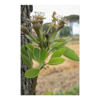 Pear tree twig with buds in spring  Tuscany, Italy Custom Stationery