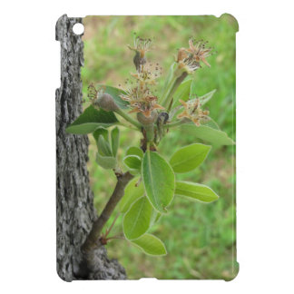 Pear tree twig with buds in spring  Tuscany, Italy iPad Mini Cover