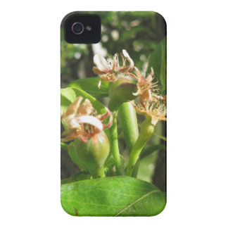 Pear tree twig with buds in spring  Tuscany, Italy iPhone 4 Case-Mate Case