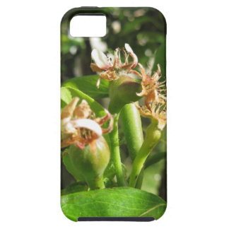 Pear tree twig with buds in spring  Tuscany, Italy iPhone 5 Cover