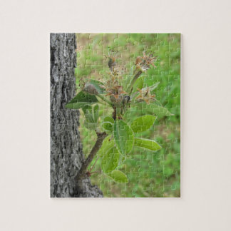 Pear tree twig with buds in spring  Tuscany, Italy Jigsaw Puzzle