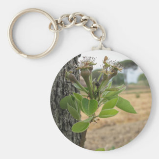 Pear tree twig with buds in spring  Tuscany, Italy Key Ring