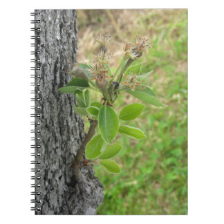 Pear tree twig with buds in spring  Tuscany, Italy Notebook