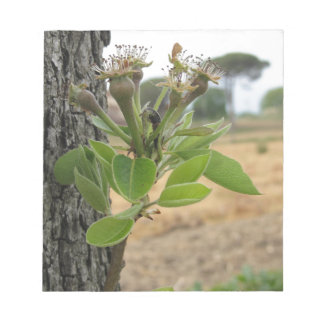 Pear tree twig with buds in spring  Tuscany, Italy Notepad