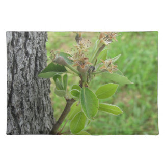 Pear tree twig with buds in spring  Tuscany, Italy Placemat