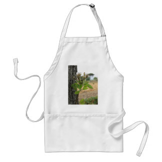 Pear tree twig with buds in spring  Tuscany, Italy Standard Apron
