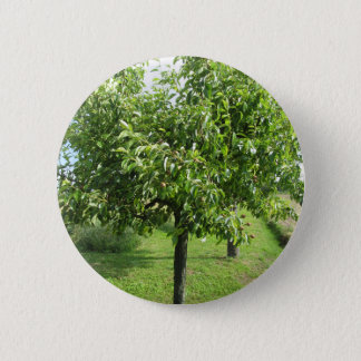 Pear tree with green leaves and red fruits 6 cm round badge