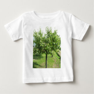 Pear tree with green leaves and red fruits baby T-Shirt