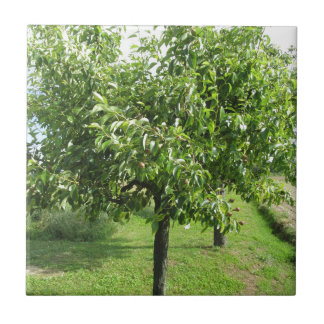 Pear tree with green leaves and red fruits ceramic tile