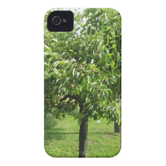 Pear tree with green leaves and red fruits iPhone 4 case