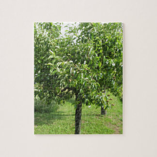 Pear tree with green leaves and red fruits jigsaw puzzle
