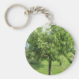 Pear tree with green leaves and red fruits key ring