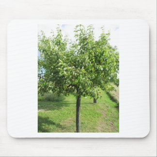 Pear tree with green leaves and red fruits mouse pad