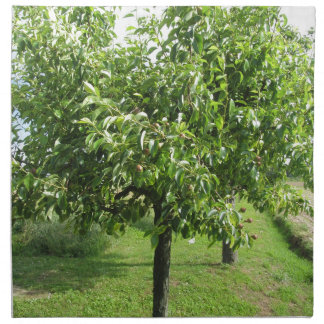 Pear tree with green leaves and red fruits napkin