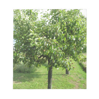 Pear tree with green leaves and red fruits notepad