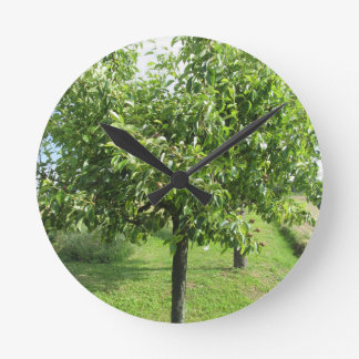 Pear tree with green leaves and red fruits round clock