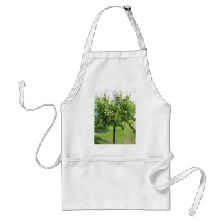 Pear tree with green leaves and red fruits standard apron