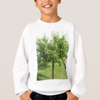 Pear tree with green leaves and red fruits sweatshirt