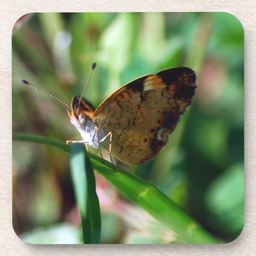 Pearl Crescent Butterfly cork coaster