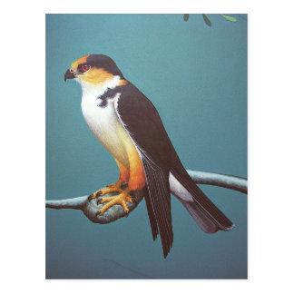 Pearl Kite Postcard