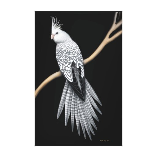 Pearl Pied Cockatiel Parrot Wrapped Canvas Canvas Print