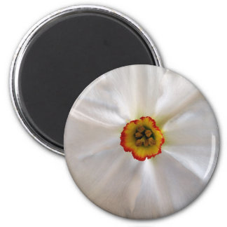 pearl white narcissus 6 cm round magnet