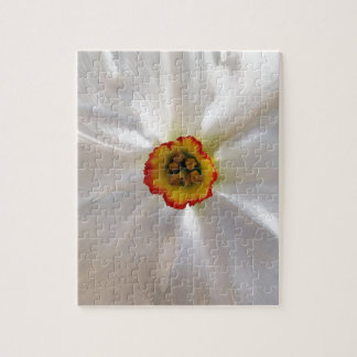 pearl white narcissus jigsaw puzzle