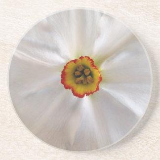 pearl white narcissus sandstone coaster