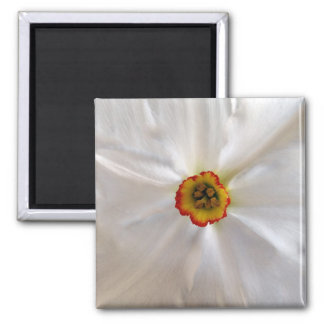pearl white narcissus square magnet