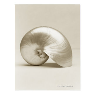Pearlised nautilus sea shell postcard