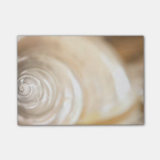 Pearly White Sea Shell Marine Nature Post-it Notes