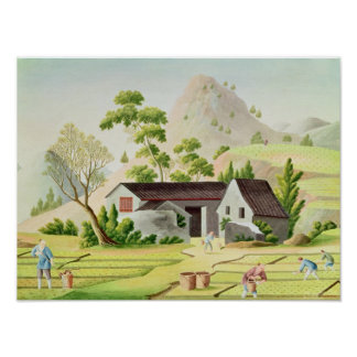 Peasants in the Paddy Fields Poster